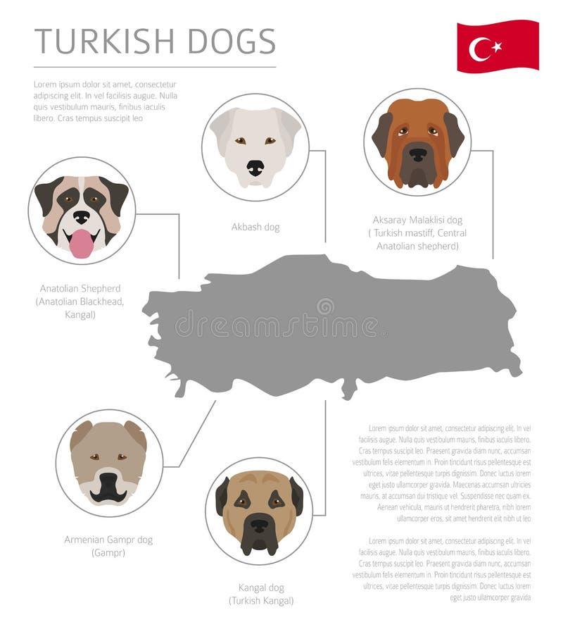 Perros por el país de origen Razas turcas del perro Templ de Infographic ilustración del vector