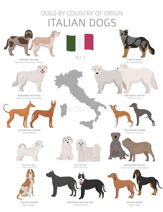 Perros por el pa?s de origen Razas italianas del perro Sistema de los perros de los pastores, de la caza, de la reuni?n, del jugu ilustración del vector
