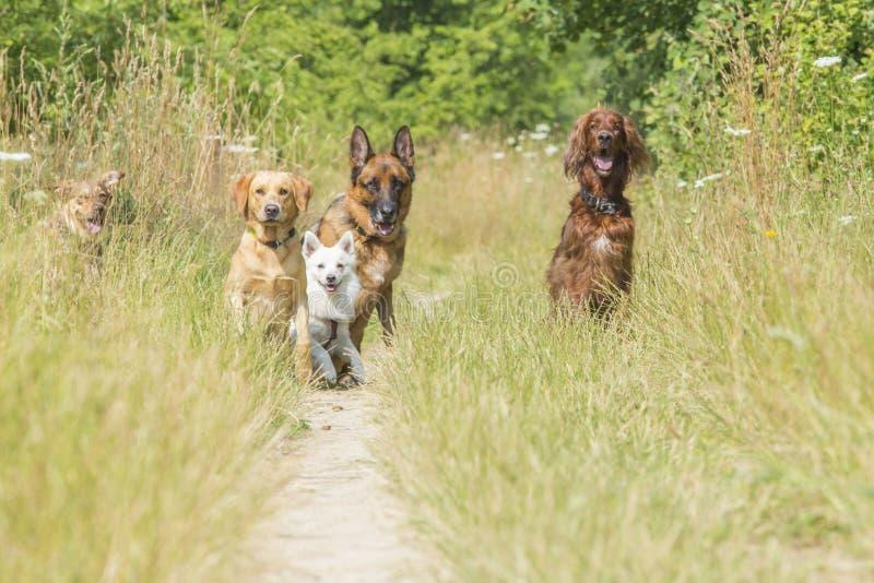 Perros que esperan comando fotos de archivo
