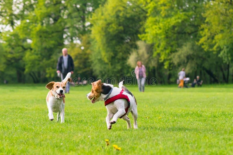 Perros que juegan en el parque fotografía de archivo libre de regalías