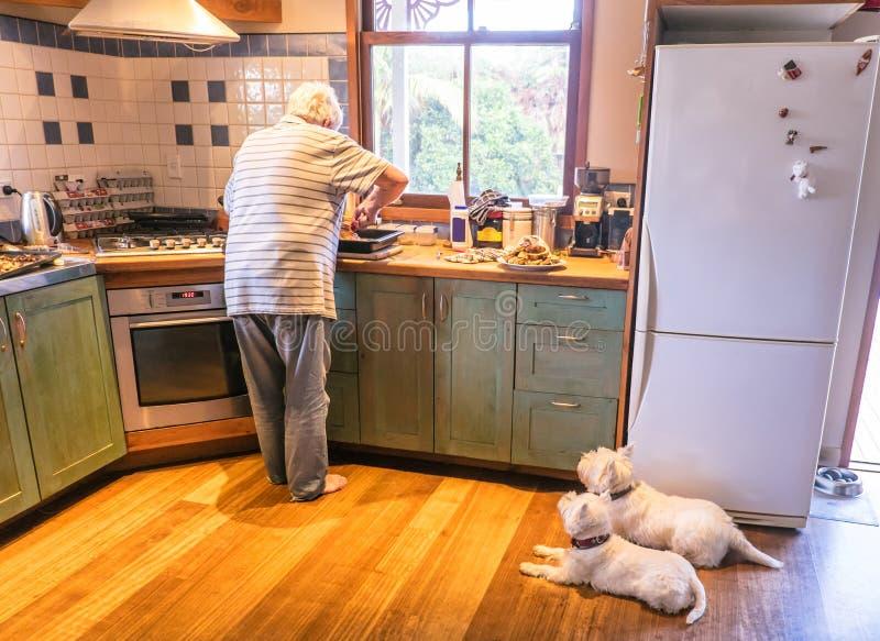 Perros que miran al dueño jubilado el cocinar de la comida de la carne asada para el almuerzo de domingo fotografía de archivo