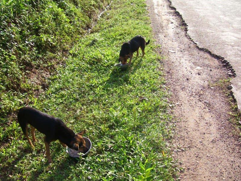 Perros sin hogar de alimentación fotografía de archivo