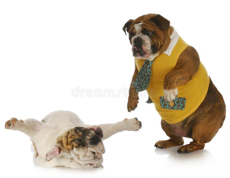 Perros tontos foto de archivo libre de regalías