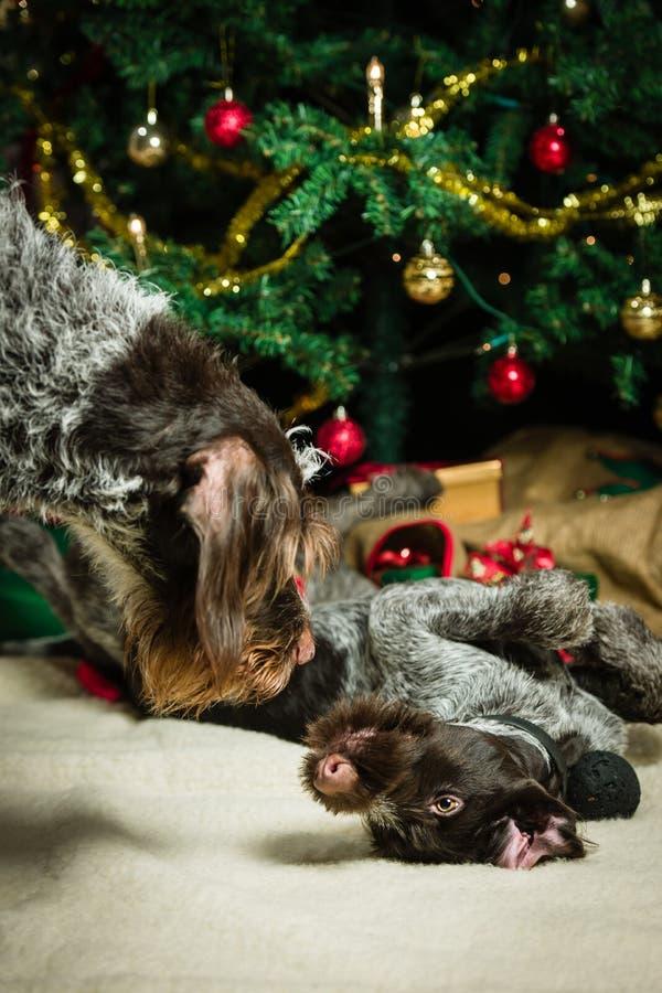 Perros y árbol de navidad imagen de archivo