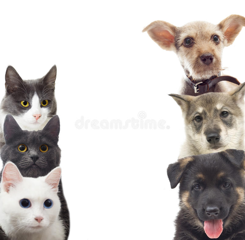 Perros y gatos foto de archivo libre de regalías