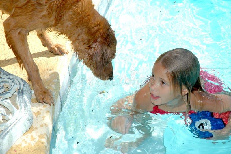 Perros y piscinas fotos de archivo