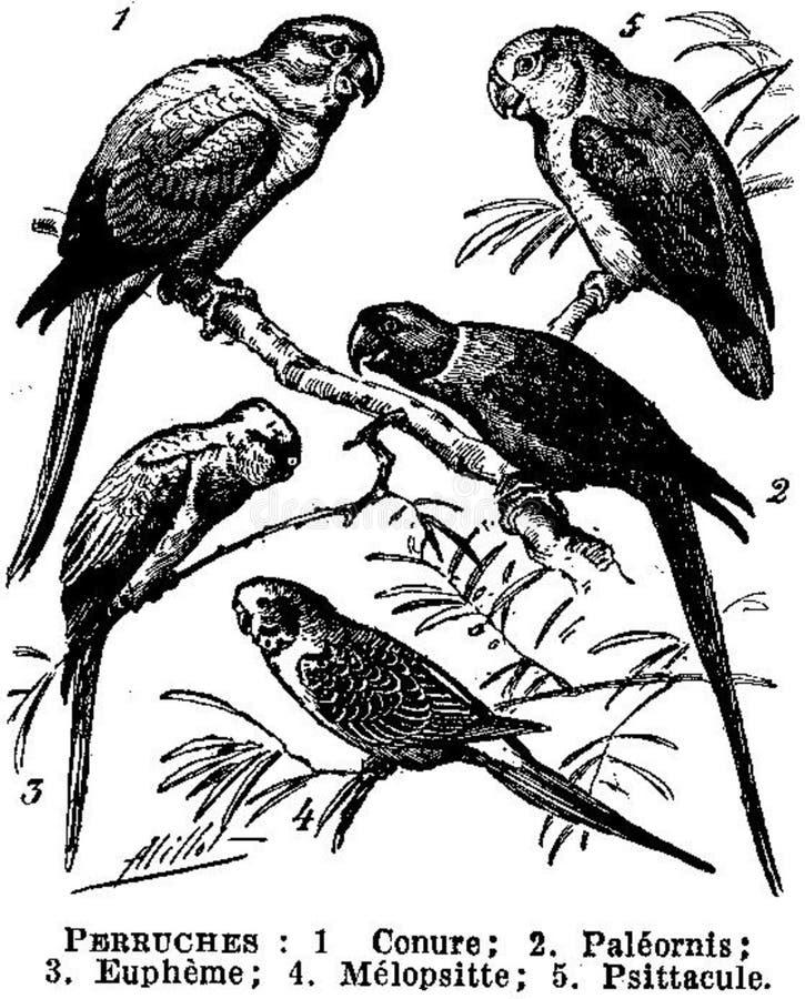 Perruches Free Public Domain Cc0 Image