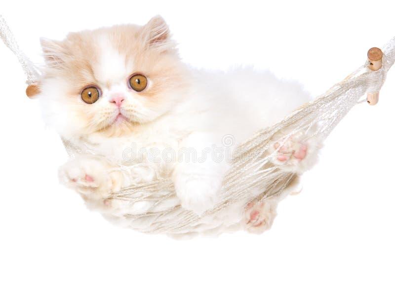 Persan mignon crème de chaton d'hamac photographie stock libre de droits