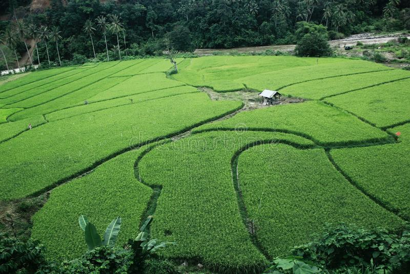Persawahan Ινδονησία στοκ φωτογραφίες
