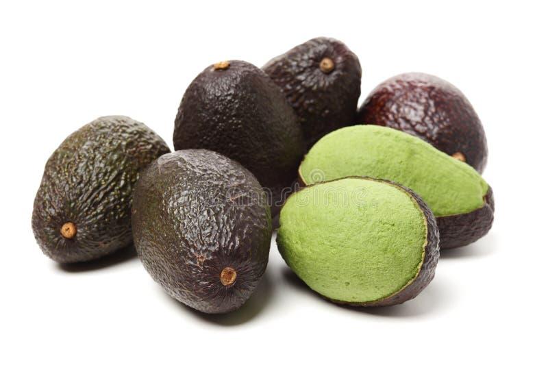 Persea dell'avocado americana fotografia stock