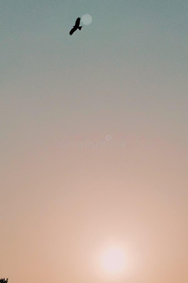 Persecución del Sun foto de archivo