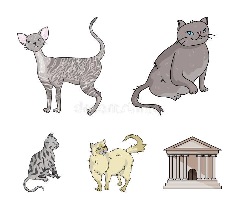 Perser, cornisk rex och annan art Symboler för samling för kattavel fastställda i materiel för symbol för tecknad filmstilvektor royaltyfri illustrationer