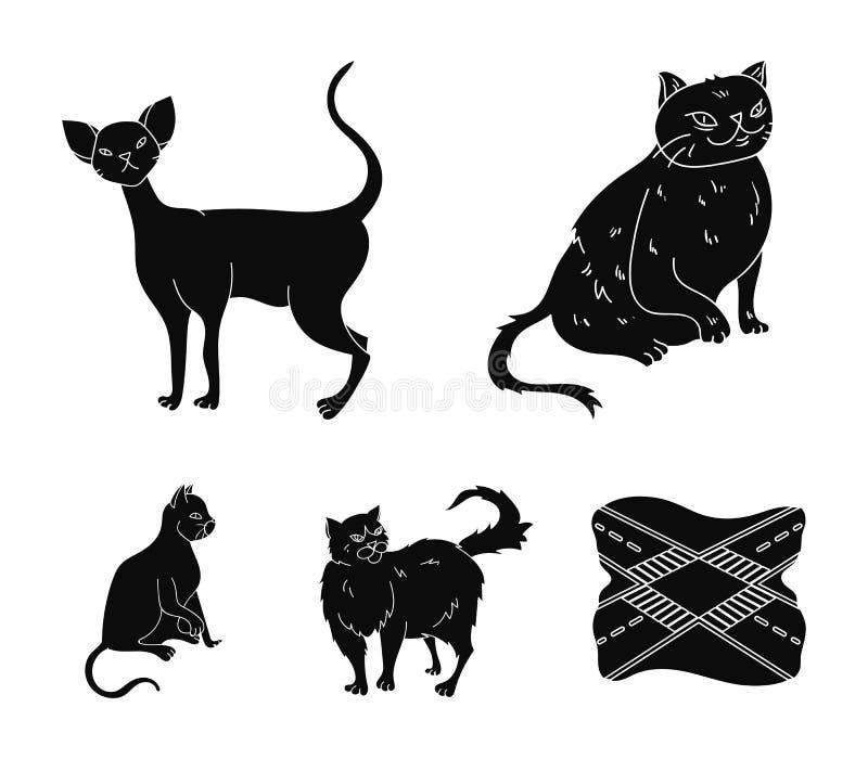 Perser, cornisk rex och annan art Symboler för samling för kattavel lagerför fastställda i svart stilvektorsymbol illustrationen royaltyfri illustrationer