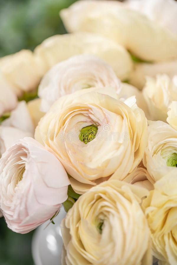 Persian buttercup. Bunch pale pink and pastel yellow ranunculus flowers in Glass vase. Vertical Wallpaper.  stock photography