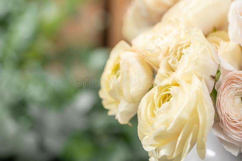 Persian buttercup. Bunch pale pink and pastel yellow ranunculus flowers in Glass vase. Vertical Wallpaper.  royalty free stock photography