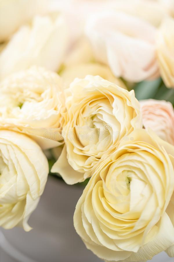 Persian buttercup. Bunch pastel yellow ranunculus flowers in Glass vase. Vertical Wallpaper. Persian buttercup. Bunch pale pink and pastel yellow ranunculus stock photography