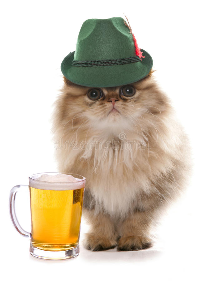 Persian cat wearing bavarian beer festival hat. Cutout stock photography