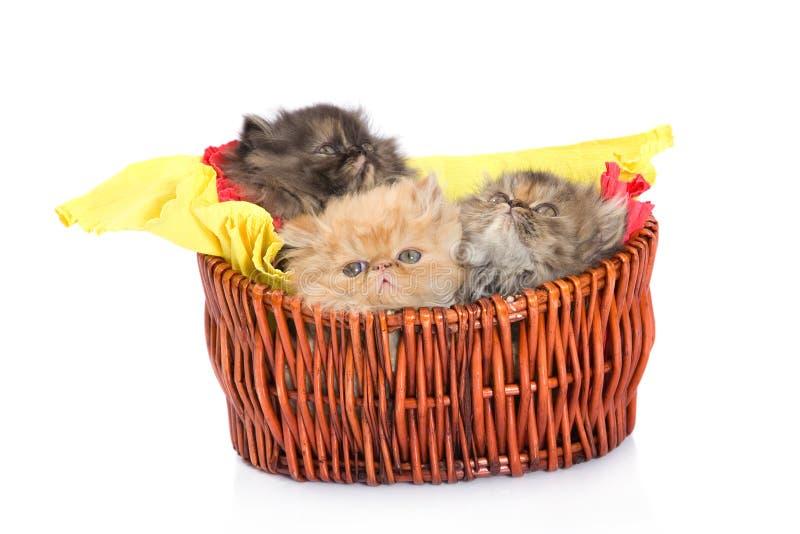 Persian Cats Stock Image