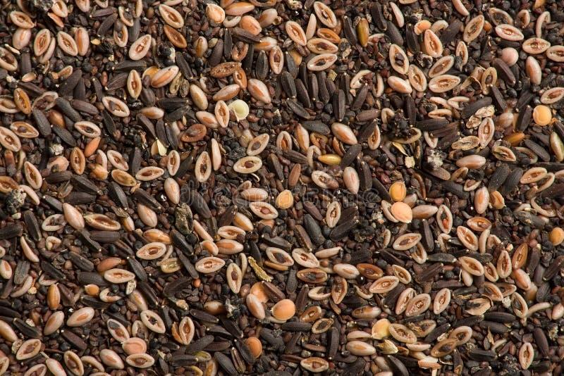 Persian spice royalty free stock photo