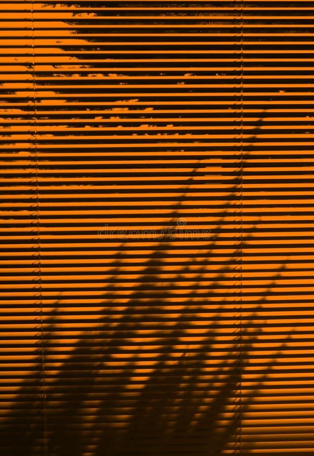 Persianas y sombra del árbol fotografía de archivo libre de regalías