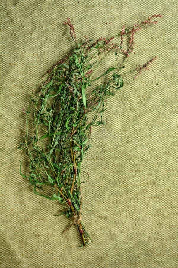 Persicaria hydropiper ξηρά χορτάρια Βοτανική ιατρική, phytotherapy στοκ εικόνα