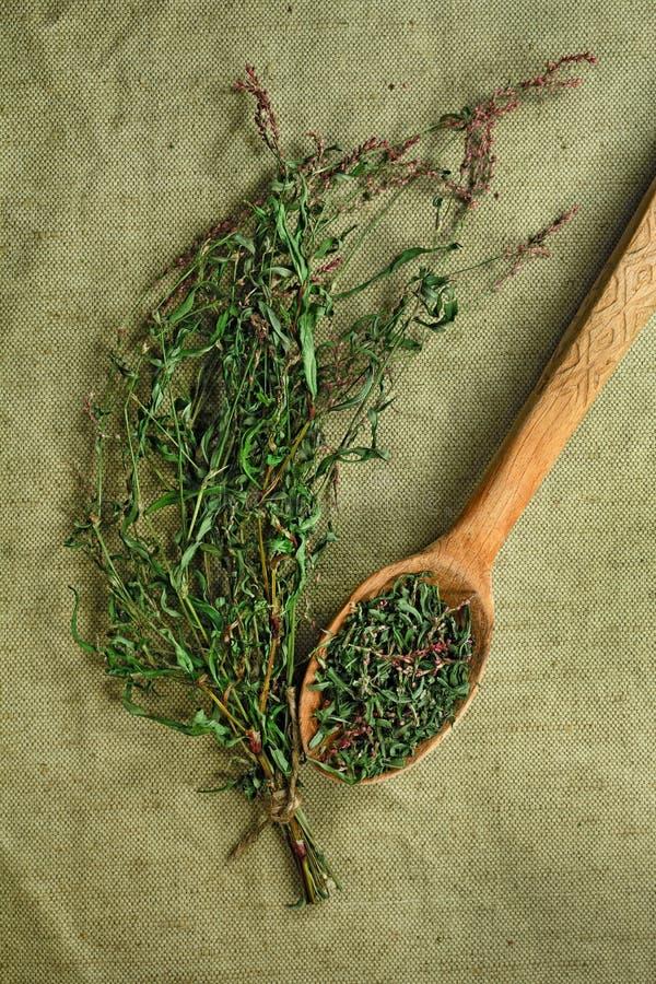 Persicaria hydropiper droog Kruidengeneeskunde, phytotherapy dokter royalty-vrije stock afbeelding