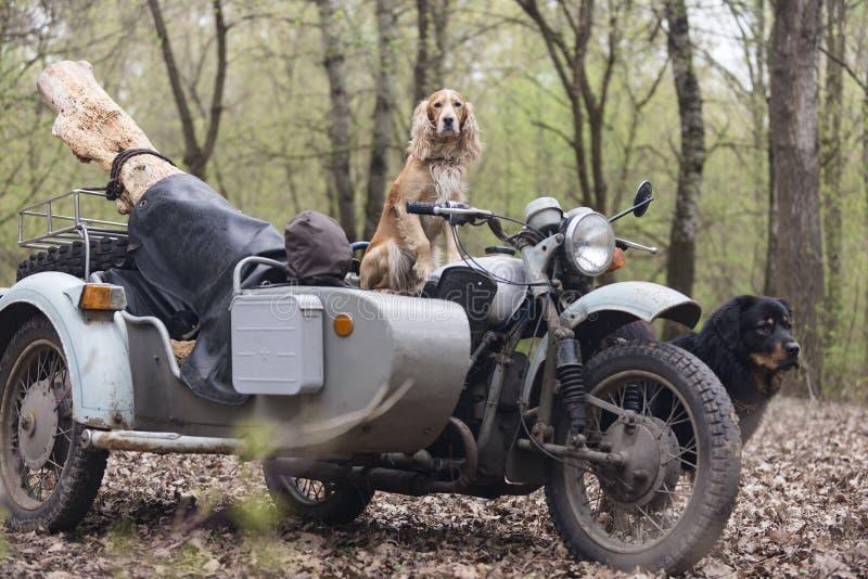 Persiga el perro de aguas y la motocicleta soviética vieja en el bosque imágenes de archivo libres de regalías
