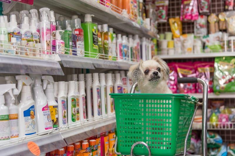 Persiga la espera tan linda un dueño del animal doméstico en la tienda de animales imágenes de archivo libres de regalías