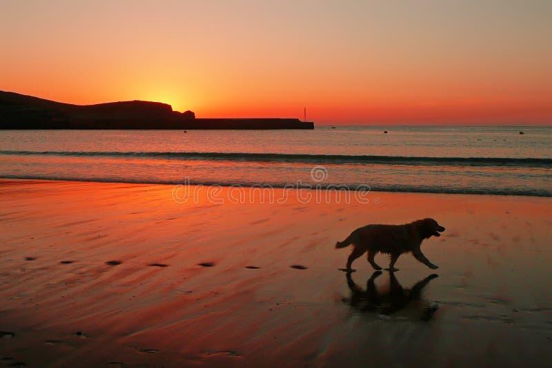 Persiga la silueta y las huellas en la playa en la puesta del sol imagenes de archivo
