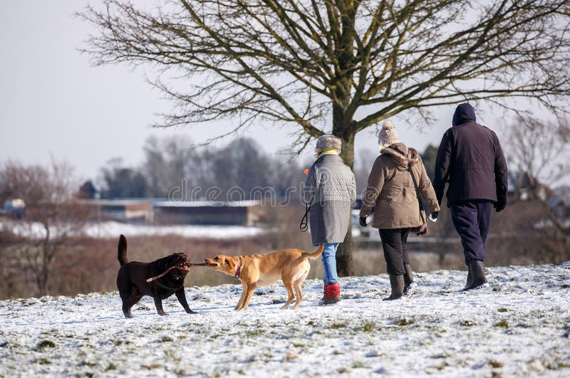 Persiga a los caminante en el parque en el invierno imagen de archivo
