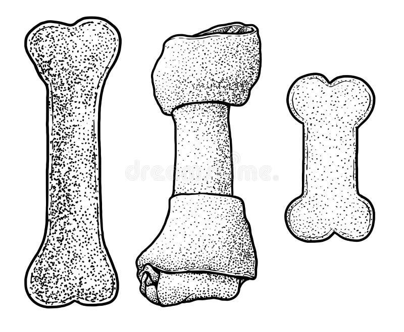 Persiga a mastigação da ilustração do osso, desenho, gravura, tinta, linha arte, vetor ilustração do vetor