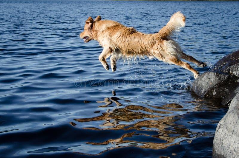 Persiga a natação imagem de stock royalty free