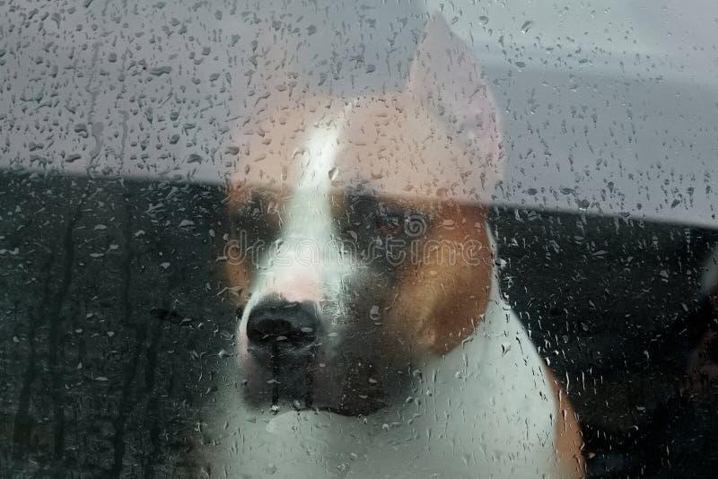 Persiga o assento em um carro e a vista através do vidro foto de stock royalty free