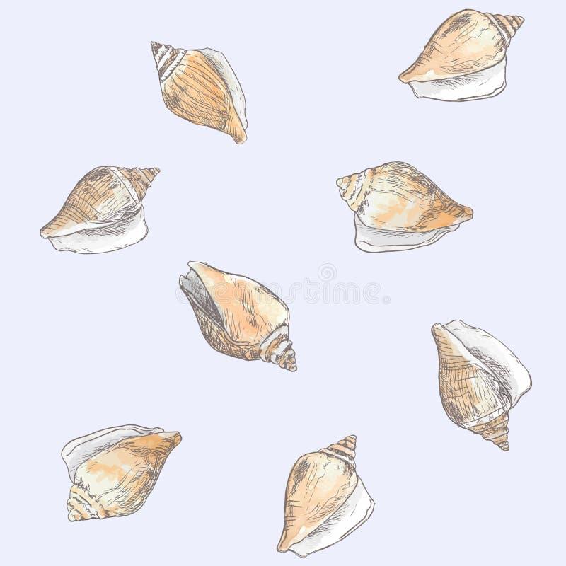 Persiga o búzio, vetor tirado mão do esboço do shell da asa ilustração royalty free