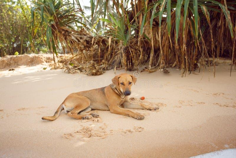 Persiga o encontro na praia o f Sri Lanka imagem de stock royalty free