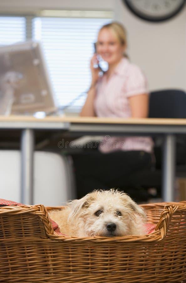 Persiga o encontro no escritório home com a mulher no fundo imagem de stock