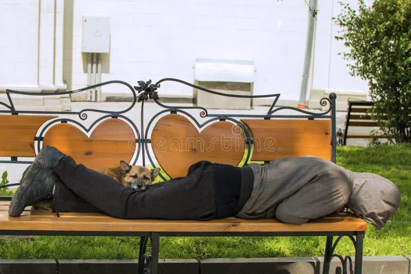 Persiga y dueño bebido dormido en el banco sol imágenes de archivo libres de regalías