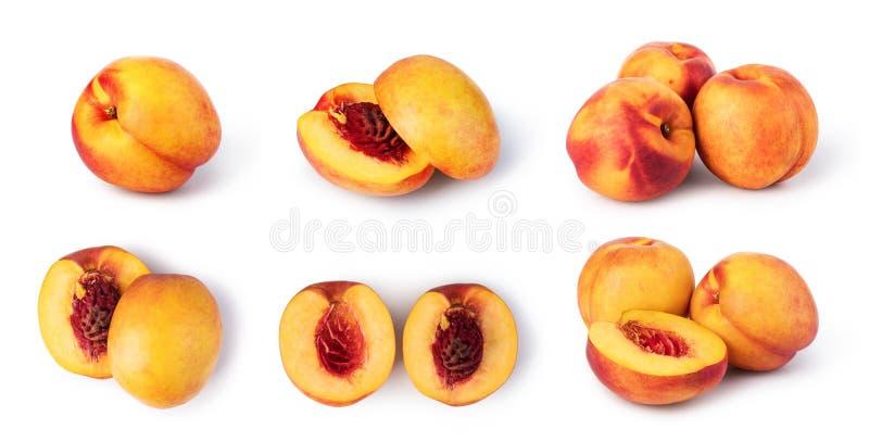 persika royaltyfri bild