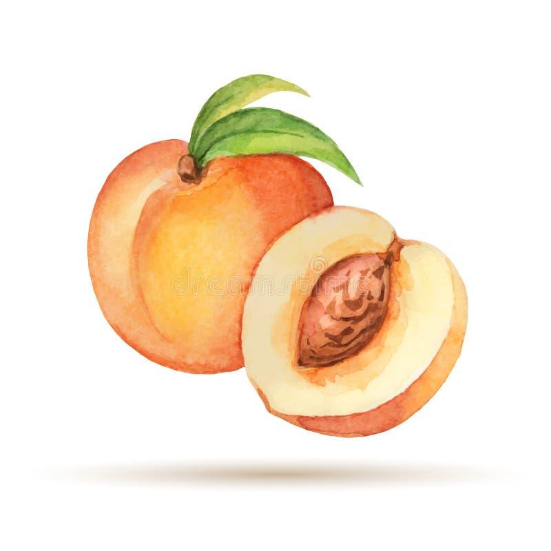 persika vektor illustrationer