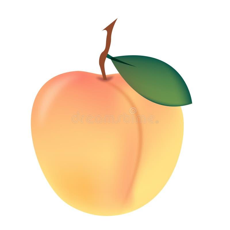 persika stock illustrationer