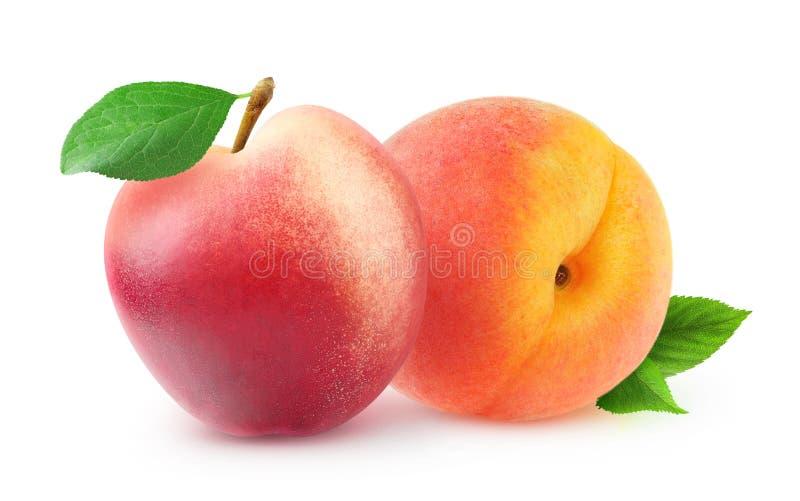persika och nektarin arkivbilder