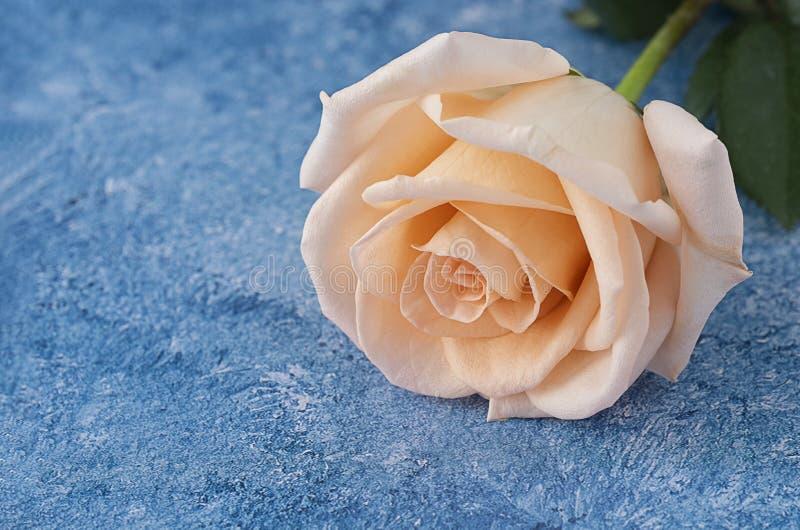 persikafärg steg på vit för akrylmålarfärg bakgrund för en blått och arkivbilder