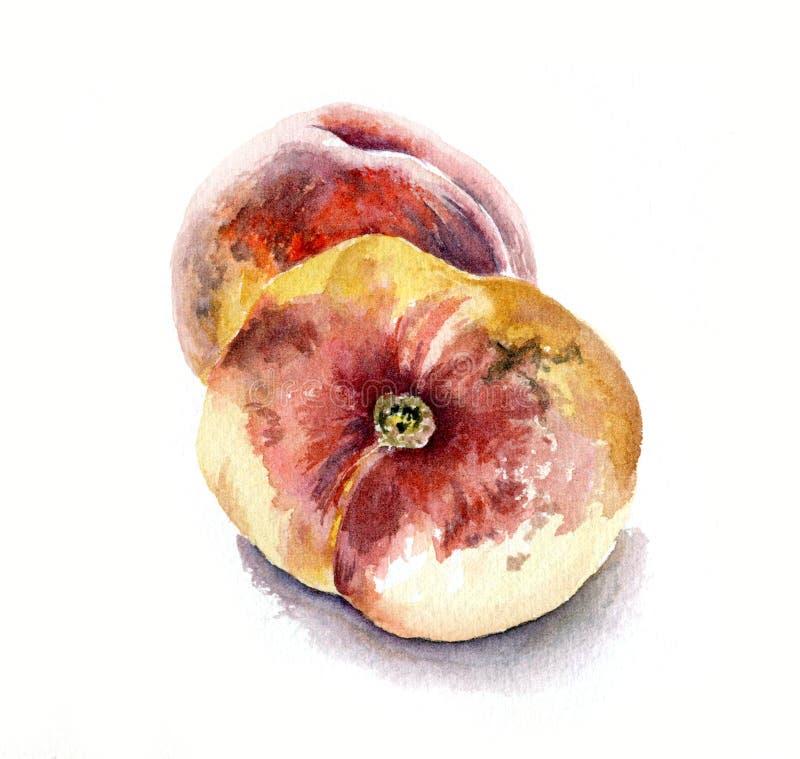 persikor två för flygillustration för näbb dekorativ bild dess paper stycksvalavattenfärg stock illustrationer