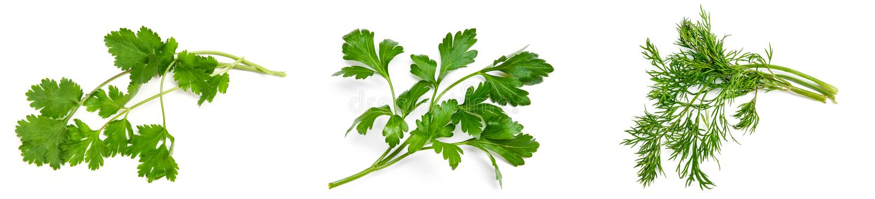 Persil, cilantro, aneth sur un blanc photographie stock