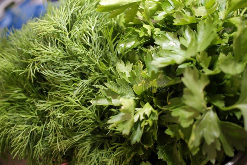 Persil et aneth Herbes fra?ches, organiques, de jardin, d'aneth et de persil Vitamines vertes detox Herbes aromatiques pour la sa images stock