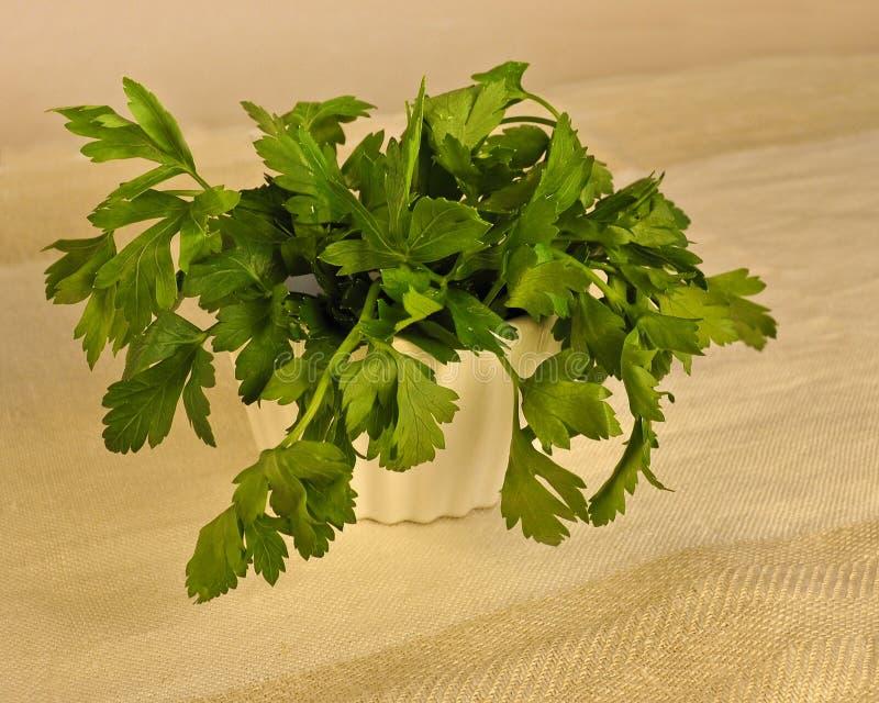 Persil plat vert frais de lame dans une cuvette. photos stock