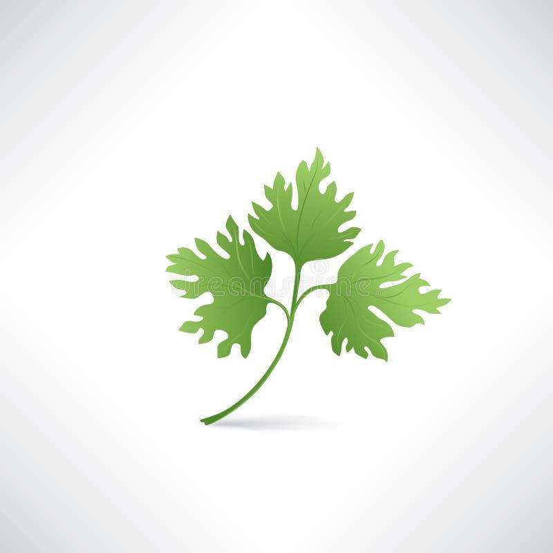 Persil vert frais d'isolement sur l'icône saine de nourriture de salade blanche illustration stock