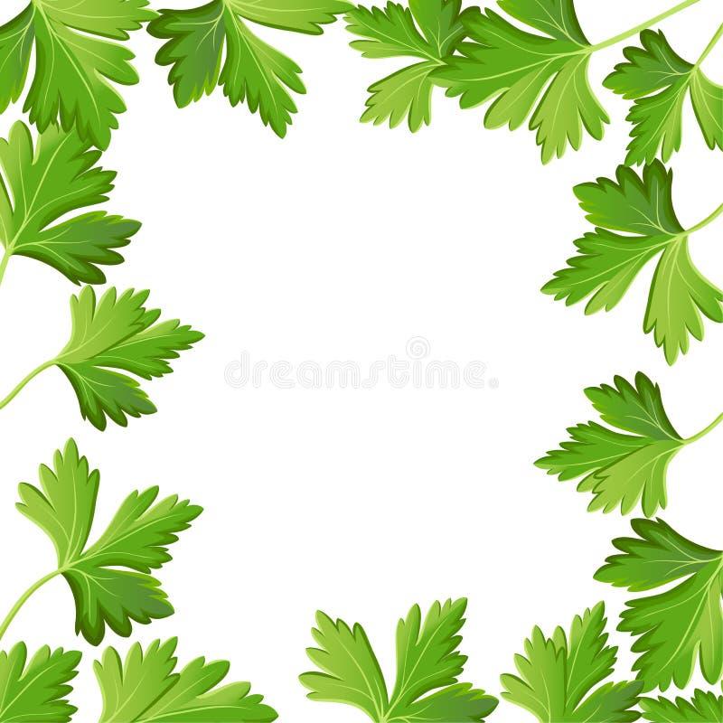 Persilja som isoleras på den vita foto-realistiska illustrationdesignbeståndsdelen i kulinariskt och att laga mat ingrediensen, p stock illustrationer