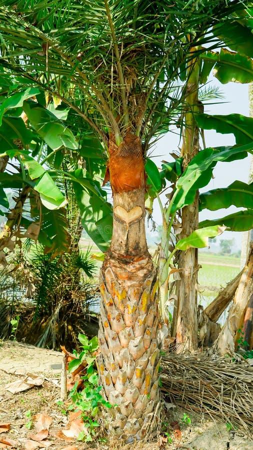 Persimmon στόμα δέντρων ` s μακρο σύνολο ημερομηνίας - άποψη στοκ φωτογραφία με δικαίωμα ελεύθερης χρήσης