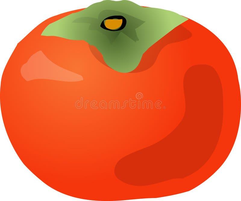 Download Persimmon stock vector. Illustration of persimmon, retro - 2995472